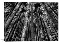Stover Trees in Black and White, Canvas Print