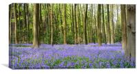 Bluebell wood, Canvas Print