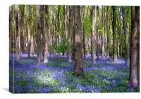 A carpet of bluebells!, Canvas Print