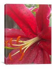 Red Lily Digital Art, Canvas Print