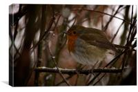 A male Robin perched on a frosty branch, Canvas Print