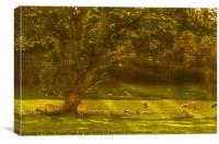 Pastoral Scene with Sheep, Canvas Print