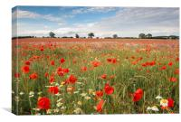 Remembrance Poppies, Canvas Print