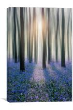 Bluebell Woods, Canvas Print