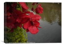 Flowers by the Canal, Canvas Print