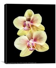 Yellow orchid, Canvas Print