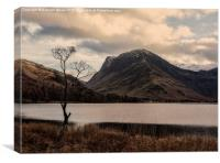 The tree, Buttermere, Canvas Print