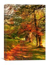 Autumn Woodland Walk, Canvas Print