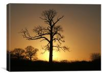 Winter Sunset on the Old Tree, Canvas Print