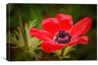 Red Wildflower, Canvas Print