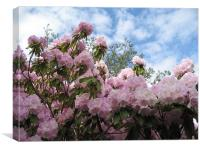 Rhododendrons in Stanley Park, Canvas Print