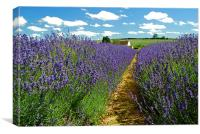 Lavender Farm, Canvas Print