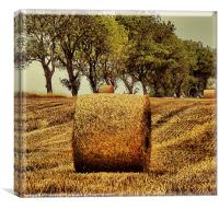 Hay Roll, Canvas Print