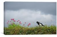 Magpie and wild flowers, Canvas Print