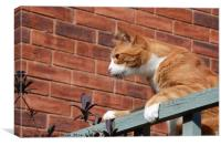 Cat On A Fence                                , Canvas Print