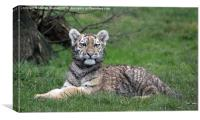Tiger cub in the grass, Canvas Print