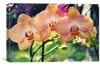 tiger orchid flowering, Canvas Print