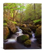 Spring in Padley Gorge, Canvas Print