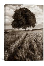 Barley Field & Oak Tree,Somerset, Canvas Print