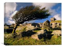 Windswept Tree on Stowes Hill, Canvas Print