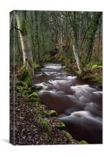 Rivelin Woods, Canvas Print