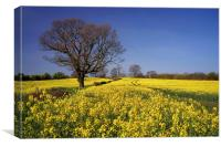 Rapeseed field & Tree, Derbyshire, Canvas Print