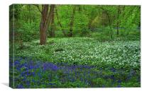 Wooley Wood Bluebells & Wild Garlic, Canvas Print