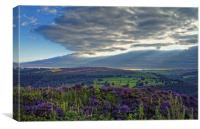 Heather on Millstone Edge                         , Canvas Print