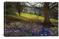 Springtime in Endcliffe Park                      , Canvas Print