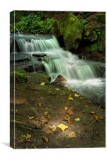 Glowing Beauty at Lumsdale                        , Canvas Print