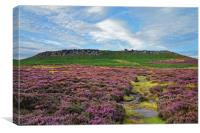 Higger Tor Heather                               , Canvas Print
