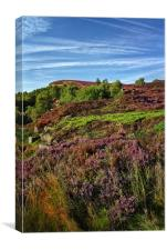 Heather along Millstone Edge                      , Canvas Print
