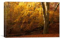 Epping Forest Autumn, Canvas Print