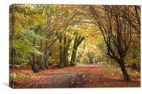 Epping Forest Autumn 5, Canvas Print