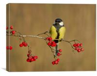 The Great Tit., Canvas Print