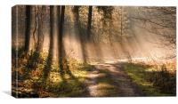 Woodland Light, Canvas Print