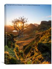 The Quiraing Tree , Canvas Print