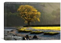 Buttermere Light , Canvas Print