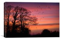 Home to Roost, Canvas Print