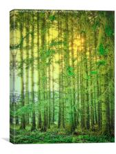 Magical Woodland, Canvas Print