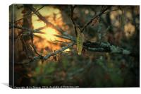 Sunsets and Catkins - Spring is in the Air!, Canvas Print