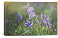 Bluebell Heaven Artsy Style, Canvas Print