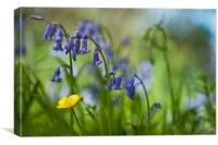 Buttercup and Blubells, Canvas Print