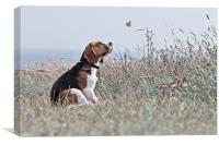 The Beagle, Canvas Print
