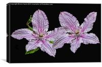Pink and White Clematis, Canvas Print