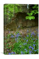 Bluebells on the edge of wood, Canvas Print