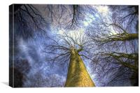 Blue sky and trees, Canvas Print