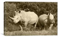 White Rhino and baby, Canvas Print