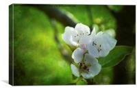 Apple Blossom., Canvas Print