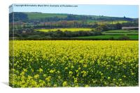 Rapeseed In Bloom., Canvas Print